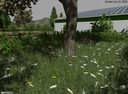 Gras-textur
