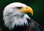 Eagle%20001