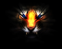 Tiger_eyes_by_urbanbushido