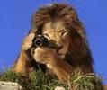 Lion866