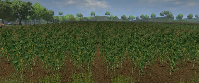 Corn texture v 1.0 image