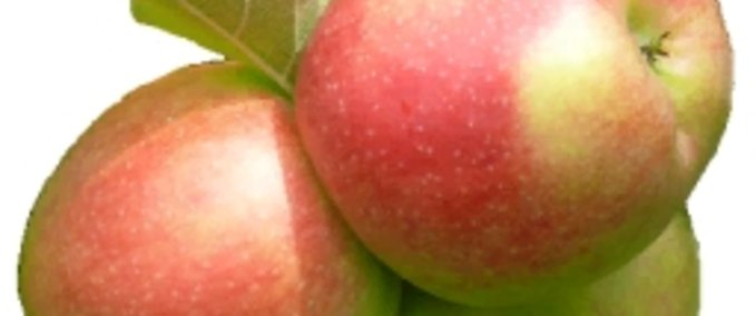 Fruchtsorte-apfel