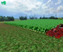 Sugarbeet-textur-hd