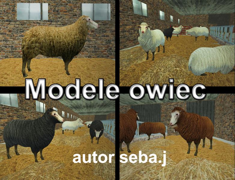 Ls 15 Schafe