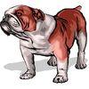 Bulldog77