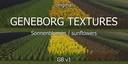 Texturen-sonnenblumen