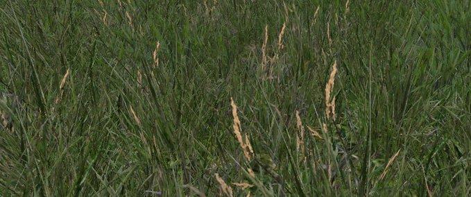 Grass-texture--7