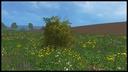 Der-sindende-busch
