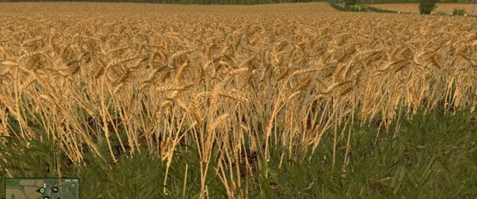 Weizen-und-gerstentextur