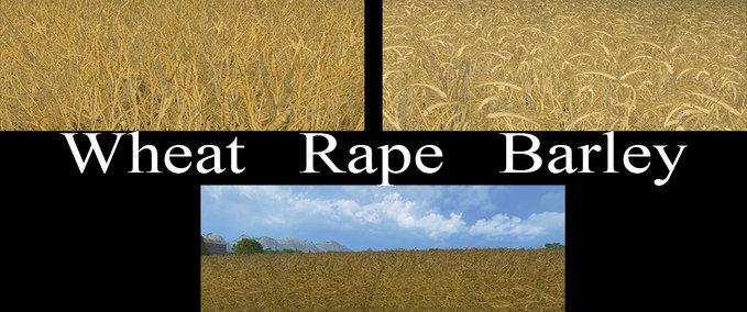 Weizen-textur-von-gerste-und-raps