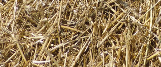 Real_grass_hay_straw
