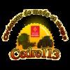 Creationcedre113