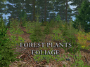 Forest-plants-foliage